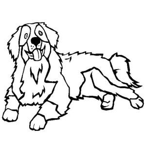 Coloriage chien bouvier bernois