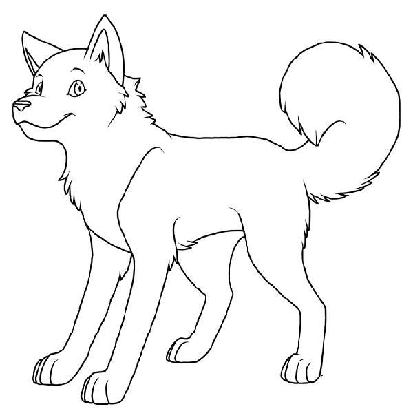 coloriage chien husky imprimer - Coloriage Chien
